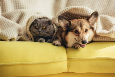 The 6 Best Low-Maintenance Pets for Apartment Renters (VIDEO)